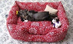 Делаем диван для собаки своими руками | m-class.info